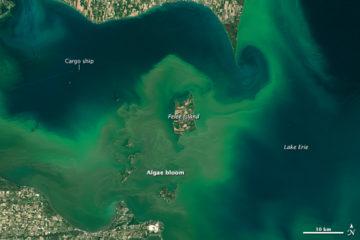 NASA satellite image from captures an algae bloom in Lake Erie in 2015. (earthobservatory.nasa.gov)